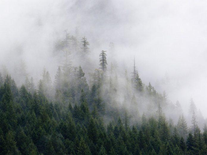 produits_elimination_de_brouillards